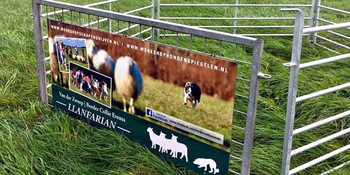 schapendrijven teambuilding de hooimijt
